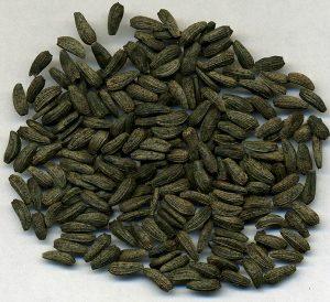 семена лопуха