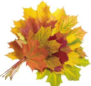 кленовый лист от артроза
