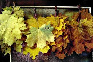 хранение листьев
