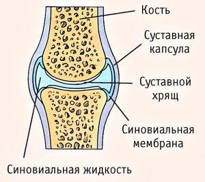 капсула коленного сустава